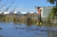 Brave Man Walks On A Rope Over A Swamp Filled With Alligators!