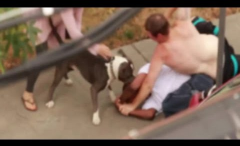 Dude Comes Really Close To Getting His Face Mauled By A Pit Bull During Fight!
